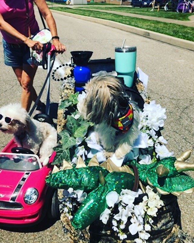 Arts Fest Dog Costume Contest 2019